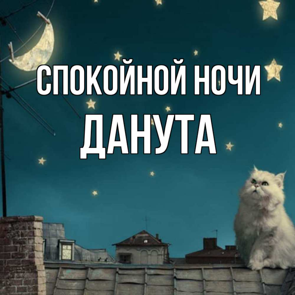 Открытка на каждый день с именем, Данута Спокойной ночи белый кот сидит на крыше Прикольная открытка с пожеланием онлайн скачать бесплатно