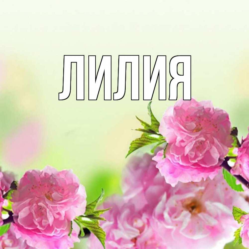 Имя лилия открытки