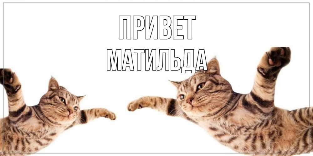 Открытка на каждый день с именем, Матильда Привет кот Прикольная открытка с пожеланием онлайн скачать бесплатно