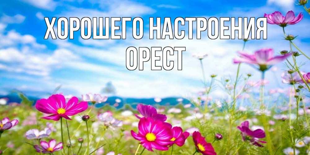 Открытка на каждый день с именем, Орест Хорошего настроения поле цветов Прикольная открытка с пожеланием онлайн скачать бесплатно