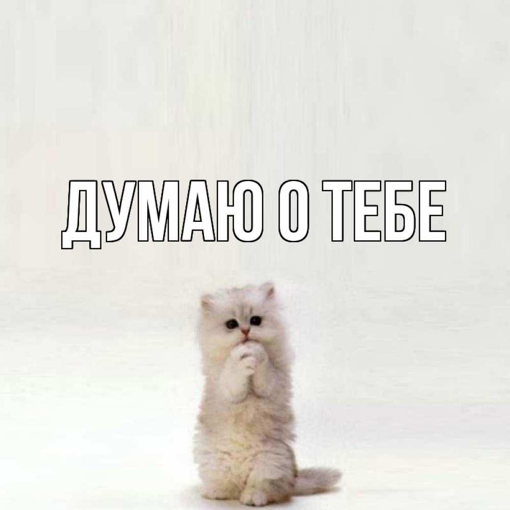 Открытка на каждый день с именем, выберите-имя Думаю о тебе кот стоит на задних лапах Прикольная открытка с пожеланием онлайн скачать бесплатно