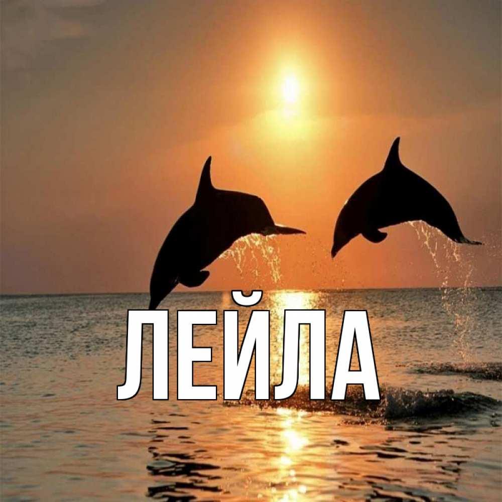Открытки с дельфинами и с пожеланиями