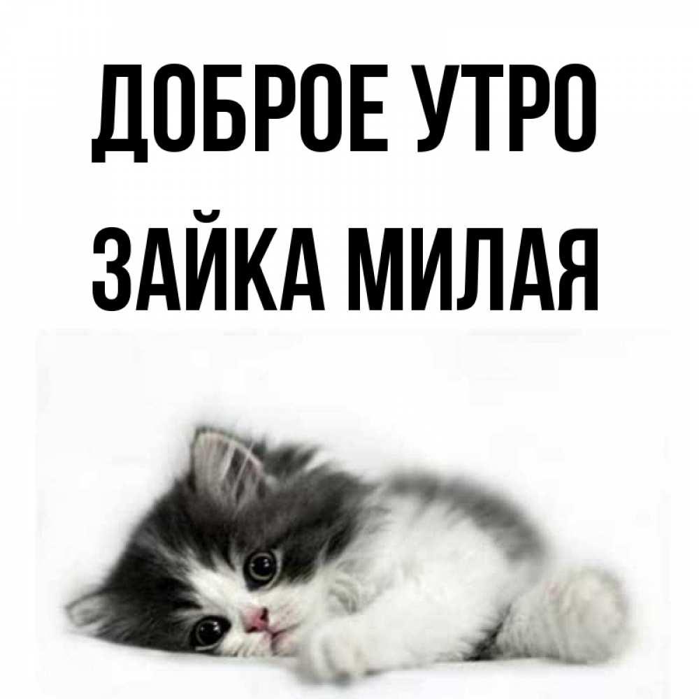 открытки доброе утро милый котик от зайки собрали