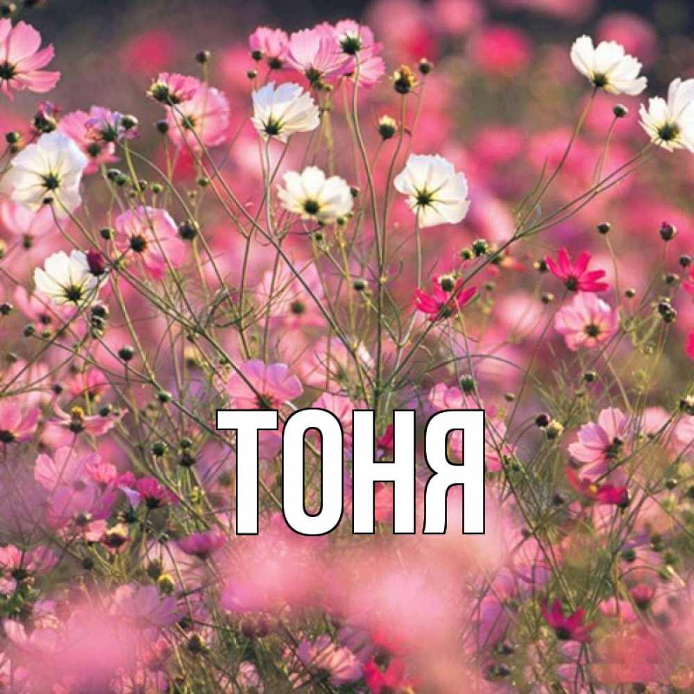 Открытка с именем тоня