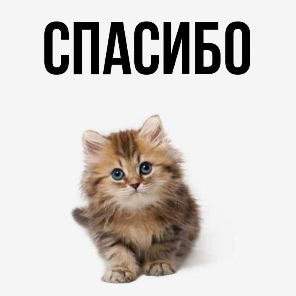 Открытка на каждый день с именем, выберите-имя Спасибо пушистый котик Прикольная открытка с пожеланием онлайн скачать бесплатно