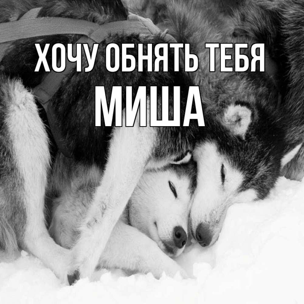 Открытка на каждый день с именем, Миша Хочу обнять тебя собачки в упряжке Прикольная открытка с пожеланием онлайн скачать бесплатно