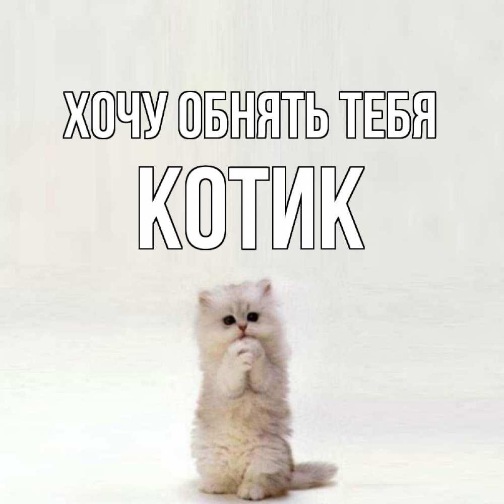 открытки с котиком хочу к тебе напоследок оставили самый
