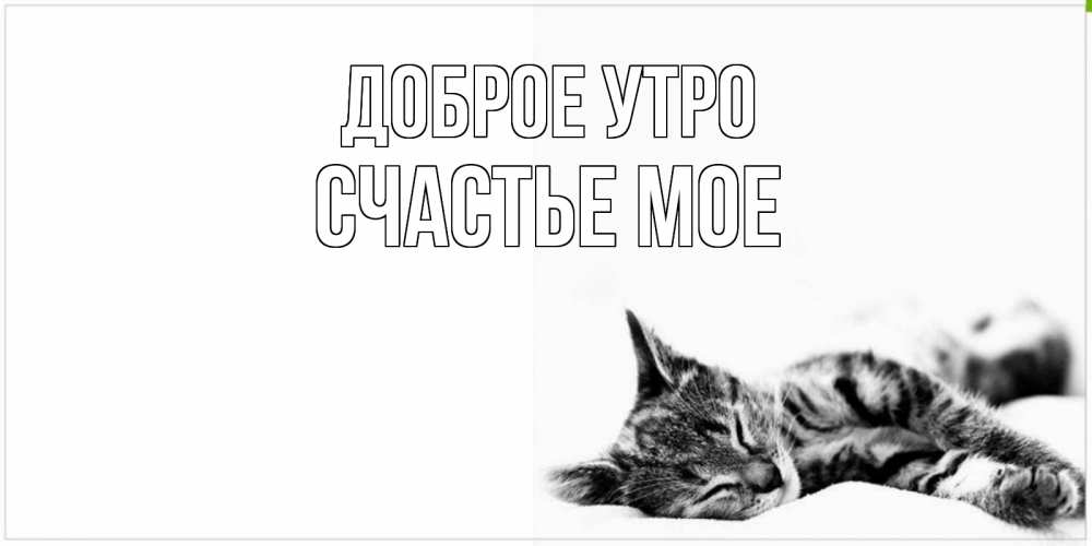 Картинки мой котик целую твой животик