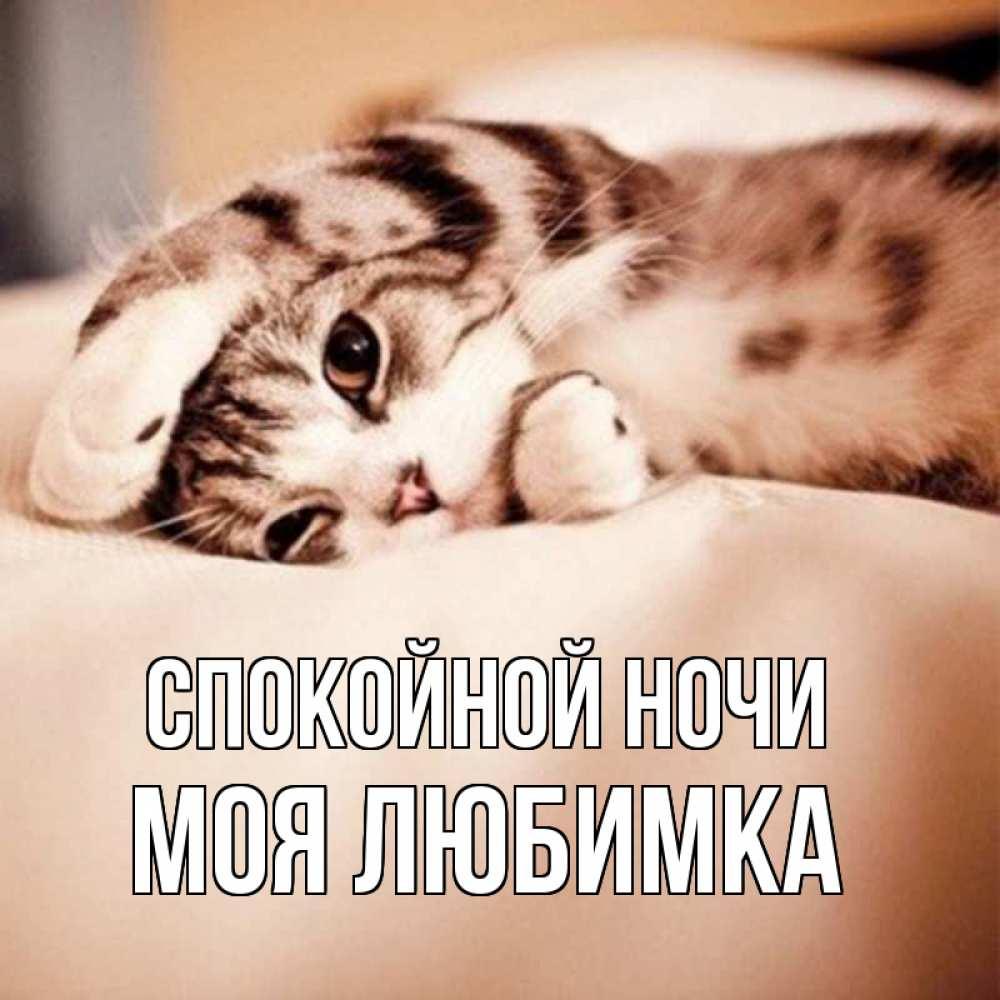 открытка сладкой ночи любимка вас