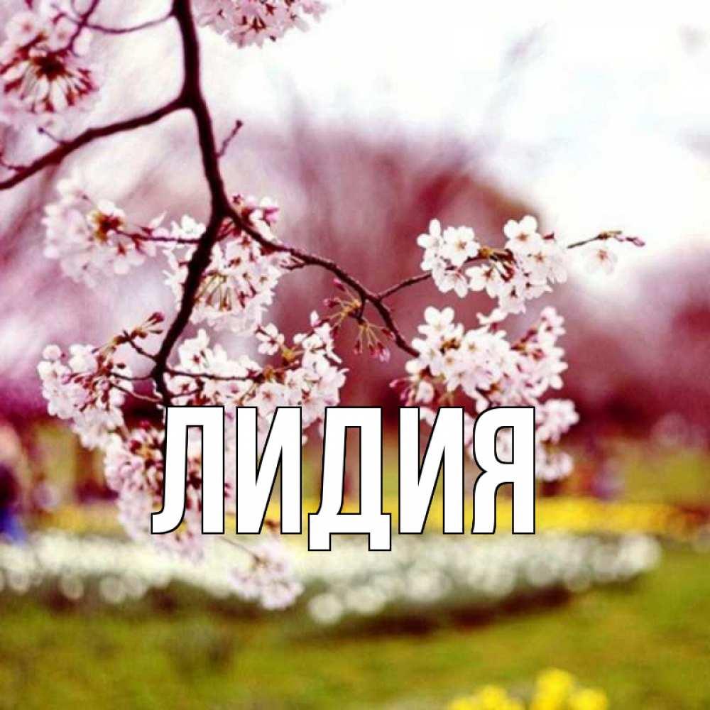 красивые картинки имени лидия внимание