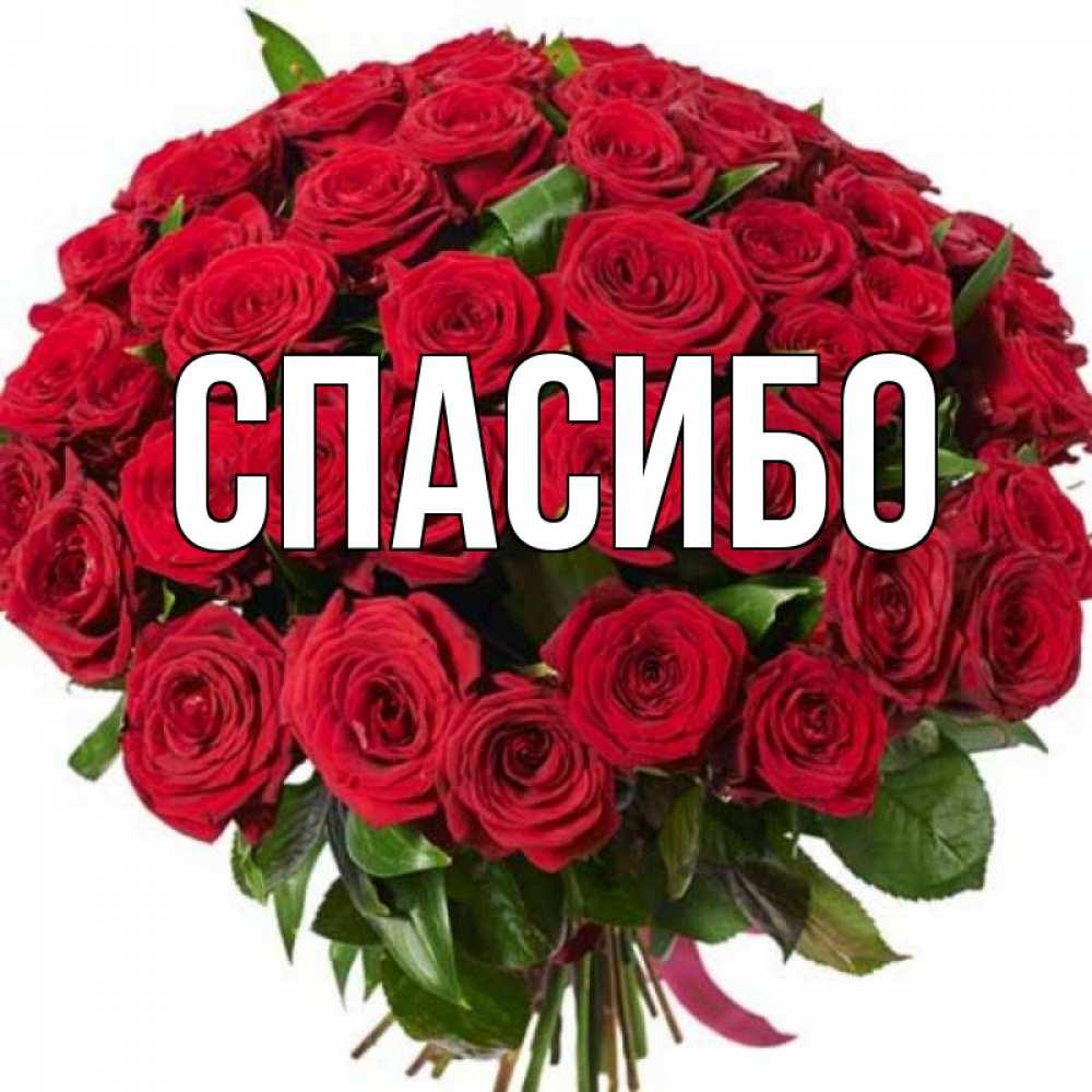 Открытка на каждый день с именем, выберите-имя Спасибо букет красных роз Прикольная открытка с пожеланием онлайн скачать бесплатно