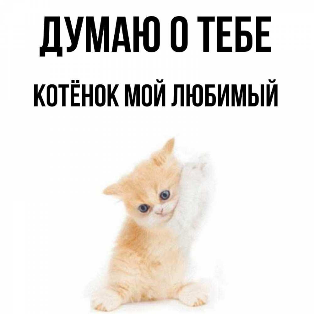 открытка думаю о тебе котенок животные отличаются