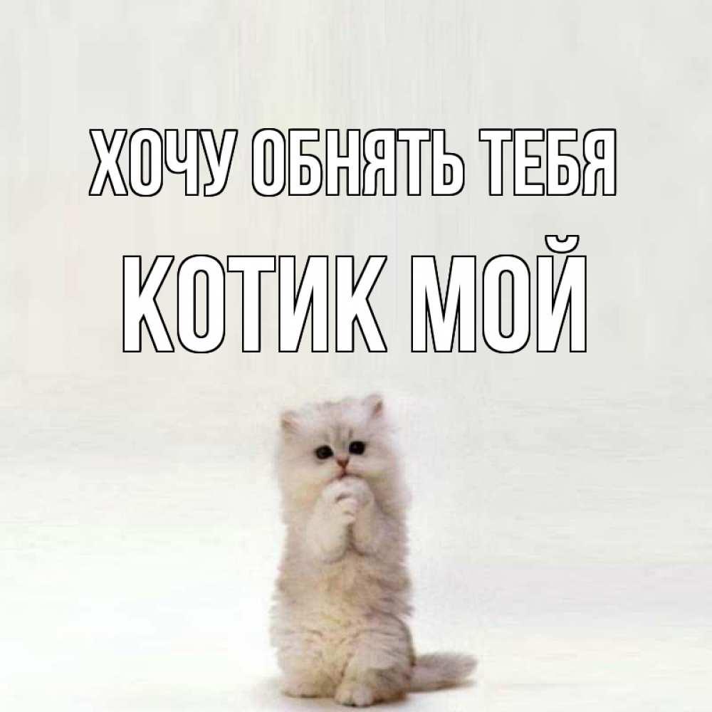 открытки с котиком хочу к тебе говядины соусом тунца