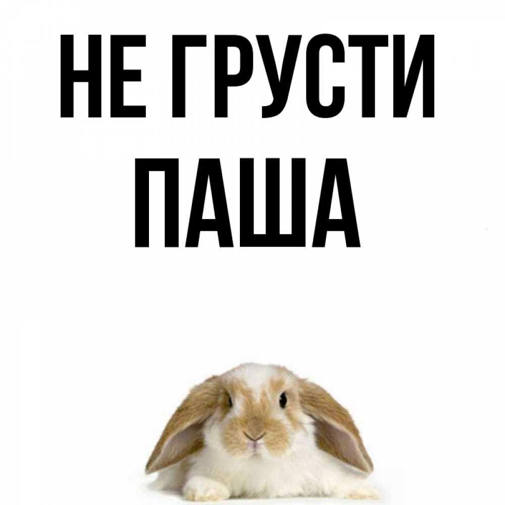 Картинки с надписью не грусти заяц, первым