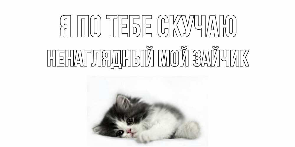 Картинки котик скучает по зайке